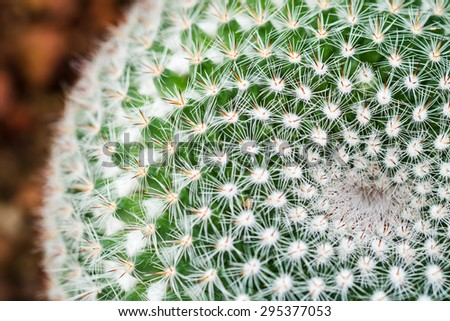 close up of cactus, shallow deep of field
