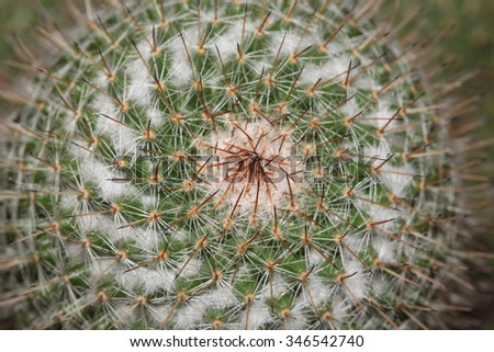 Close up of cactus texture background in thailand