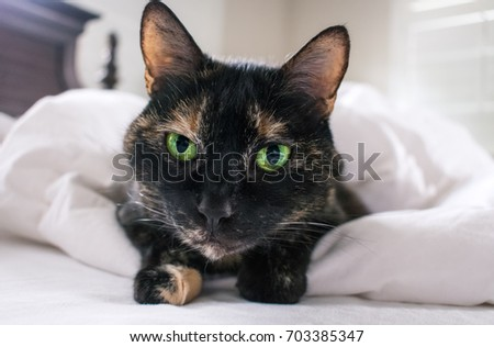 close up of calico cat with green eyes on white sheets