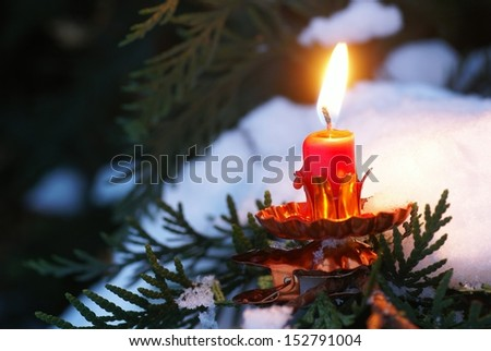 Close-up of candle on tree branch in he winter garden
