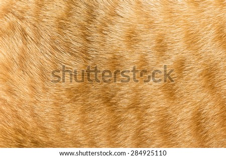 Close-up of  cat fur texture - stock photo