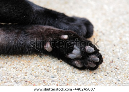close up of cat paws