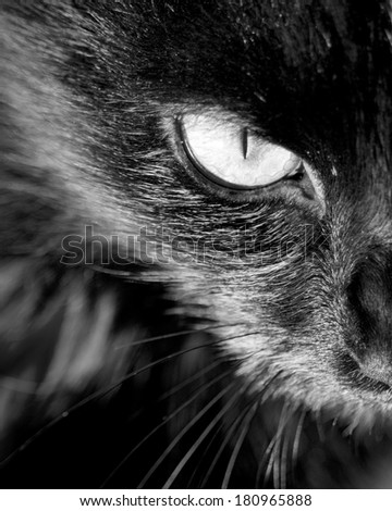 Close up of cat's eye staring at you - stock photo