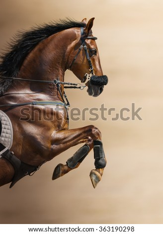 Close-up of chestnut jumping horse  in a hackamore on blurry backgrounds - stock photo