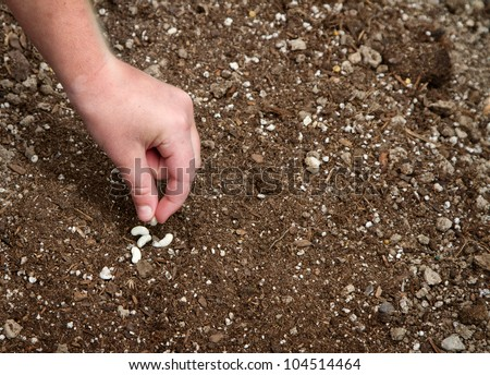 Close-up of child planting seed in garden - stock photo
