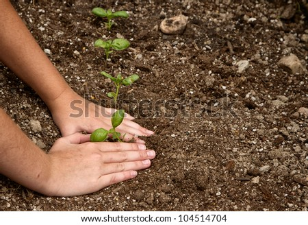 Close-up of child's hands  planting a small plant in the dirt