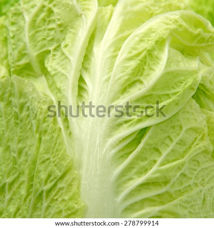 Close up of chinese cabbage fresh leaf