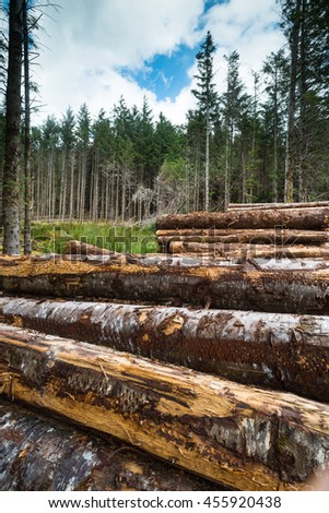 close-up of chopped wood logs at the edge of the forest - stock photo