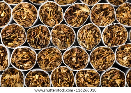 Close-up of cigarettes. Background of cigarettes. - stock photo