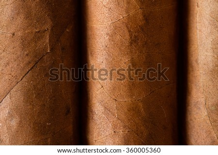 Close up of cigars in open humidor box - stock photo