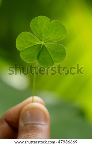 Close up of clover - stock photo