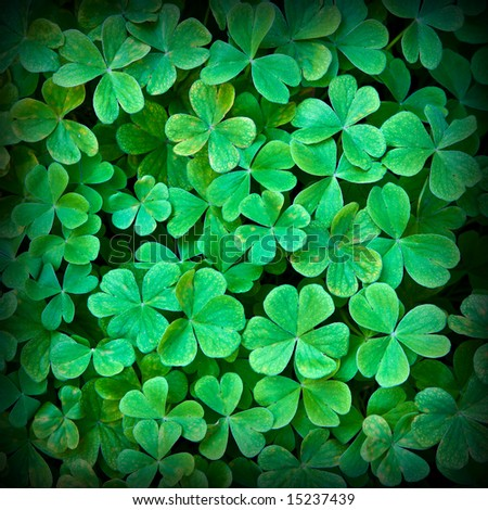Close-up of clover carpet background 3 - stock photo