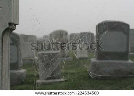 close-up of cobweb with water droplets against foggy graveyard background