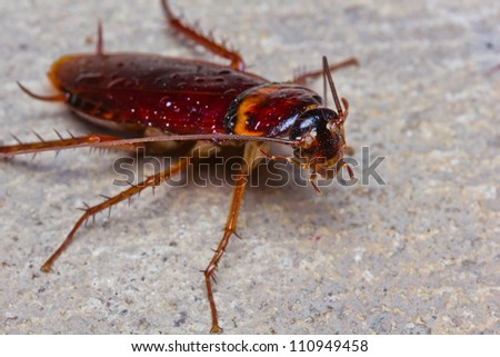 Close up of cockroach on floor - stock photo