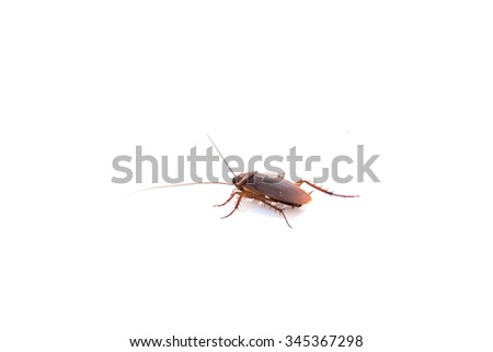Close up of cockroach on white background isolated - stock photo