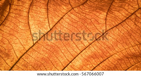 Close up of colorful autumnal dry leaf