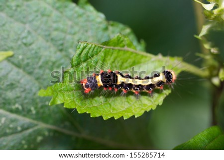Close up of colorful caterpillars. In the green grass - stock photo