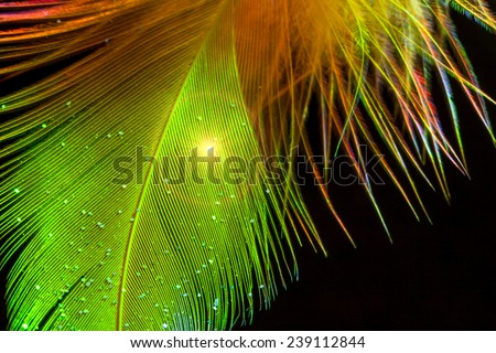 Close up of colorful feather on black - stock photo