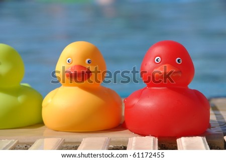 close-up of colorful rubber ducks at the pool side (shallow depth of field) - stock photo