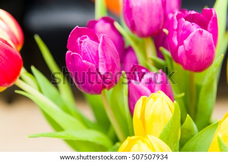 Close-up of colorful tulips.