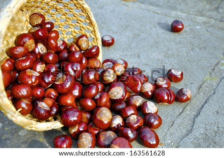 Close up of conkers in the basket - stock photo