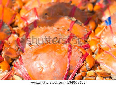 Close up of cooked crab. - stock photo