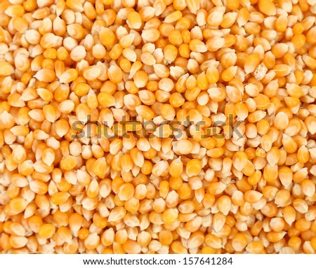 Close up of corn grains. Whole background. - stock photo