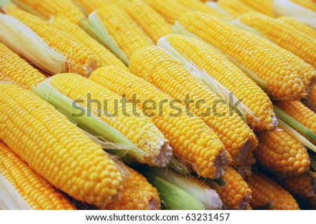 close up of corn on market stand - stock photo