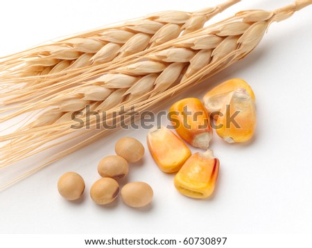 Close up of corn, wheat and soybeans shot on white background with soft shadow - stock photo