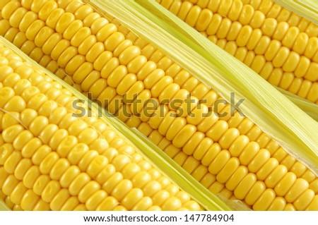 Close-up of corncobs - stock photo