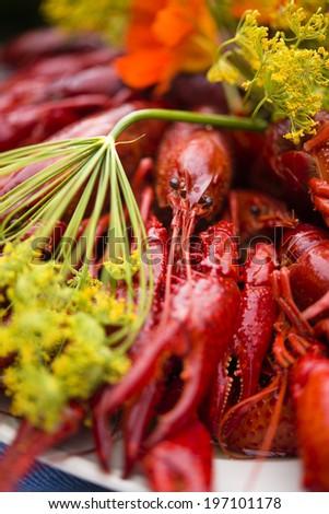 Close-up of crayfish - stock photo