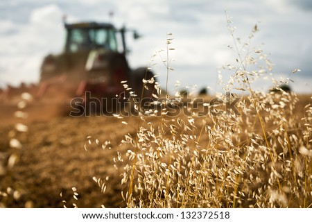 Close-up of crop with Tractor ploughing field in the background - stock photo