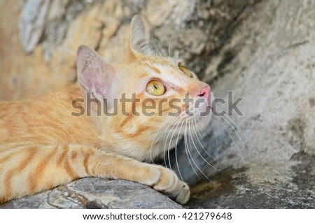 close up of curious cat - stock photo