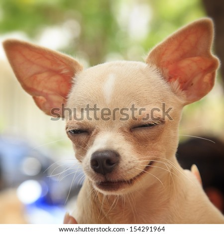 Close up of cute little dog  - stock photo