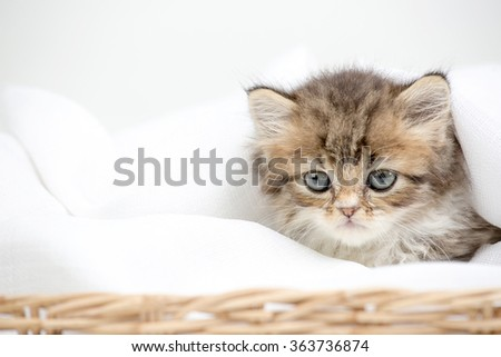 Close up of cute little tabby kitten laying on blanket
