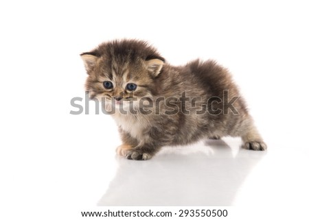 Close up of cute tabby kitten on white background isolated
