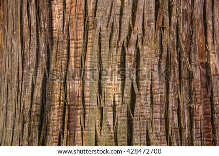 Close Up of cypress (cryptomeria japonica tree) wood - stock photo