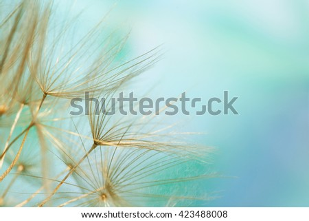 Close-up of dandelion seed on abstract blue background - stock photo