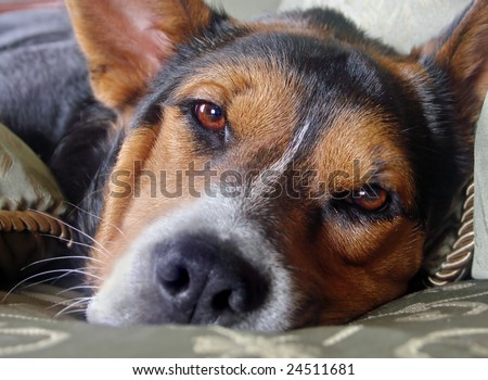 Close-up of dog lying down with sorrowful expression on his face, focus on eyes - stock photo