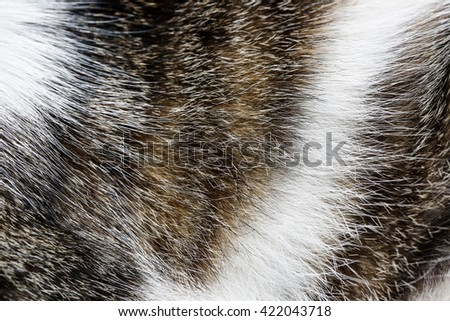 Close-up of domestic tiger patterned cat fur. Wild pet, animal freedom and rights, animal cruelty concept, background and copy space.   - stock photo
