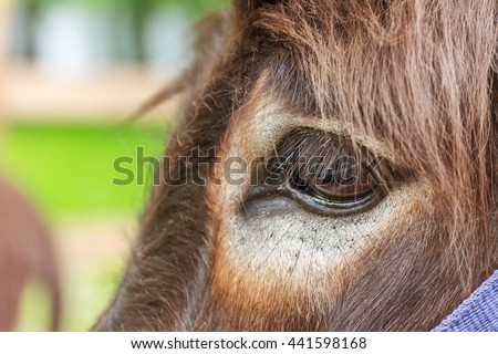 close up of donkey's eye - stock photo