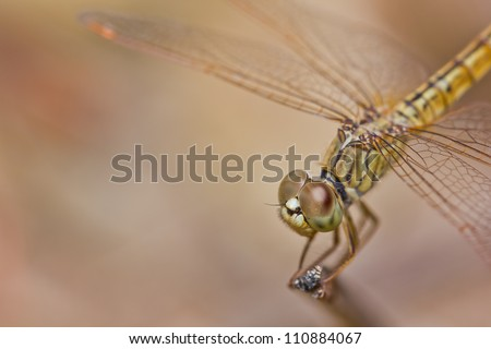 close up of dragonfly on branch