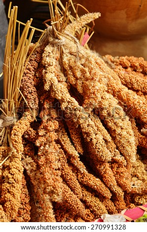Close up of dried millet - stock photo