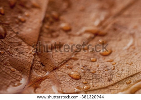 Close up of drops on leaf