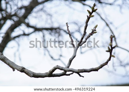 Close up of dry branches of a tree in late winter.