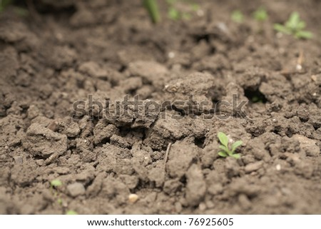 close up of dry soil, dusty and rough - stock photo