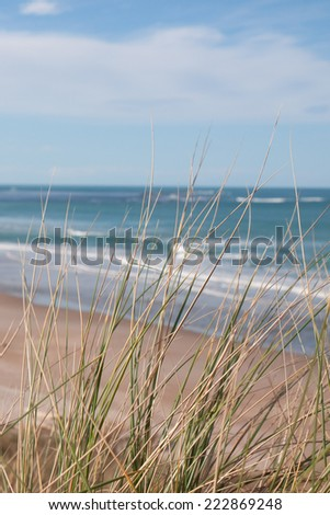 close up of dune grasses with blurred beach background
