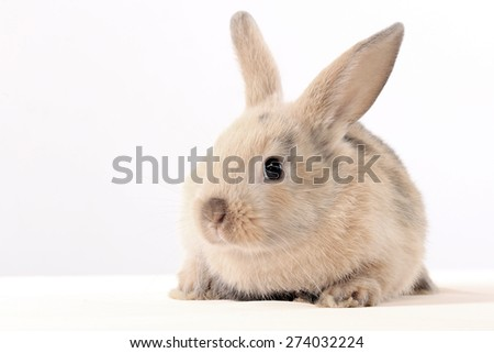 close-up of easter bunny on white background studio - stock photo