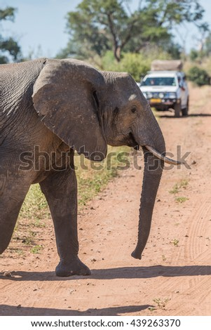 Close-up of elephant crossing track before jeep - stock photo