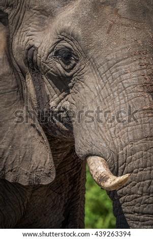 Close-up of elephant head in bright sunshine - stock photo